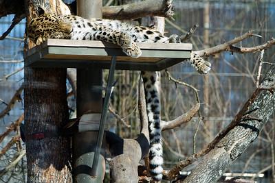 Korkeasaari Zoo 09.04.2011