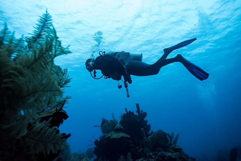 Scuba diver underwater near coral reefs, Belize