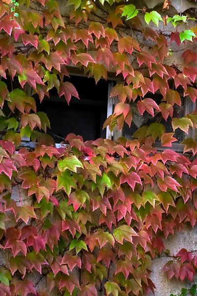 lourmarin leaf window.jpg