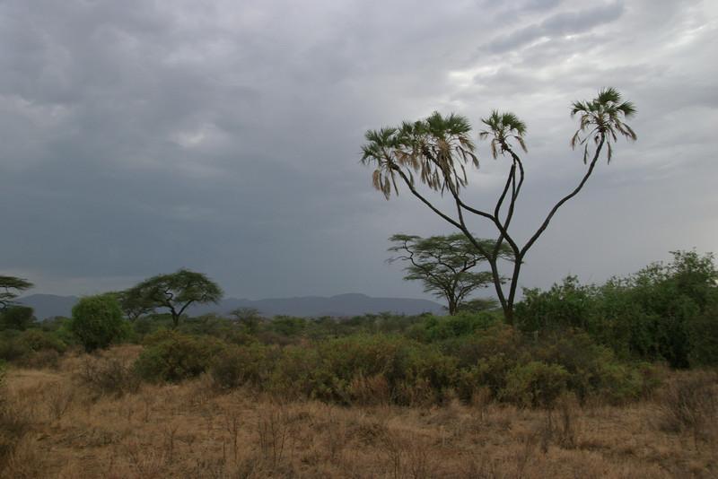 Samburu scenery