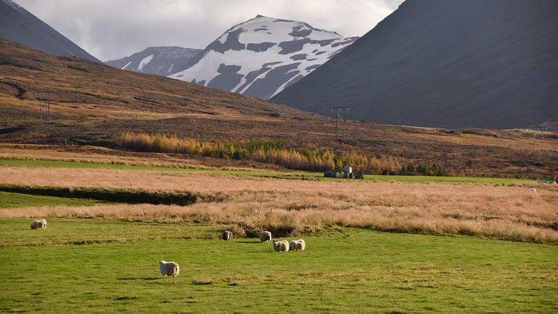 Iceland_2015_10_07_16_10_20.jpg