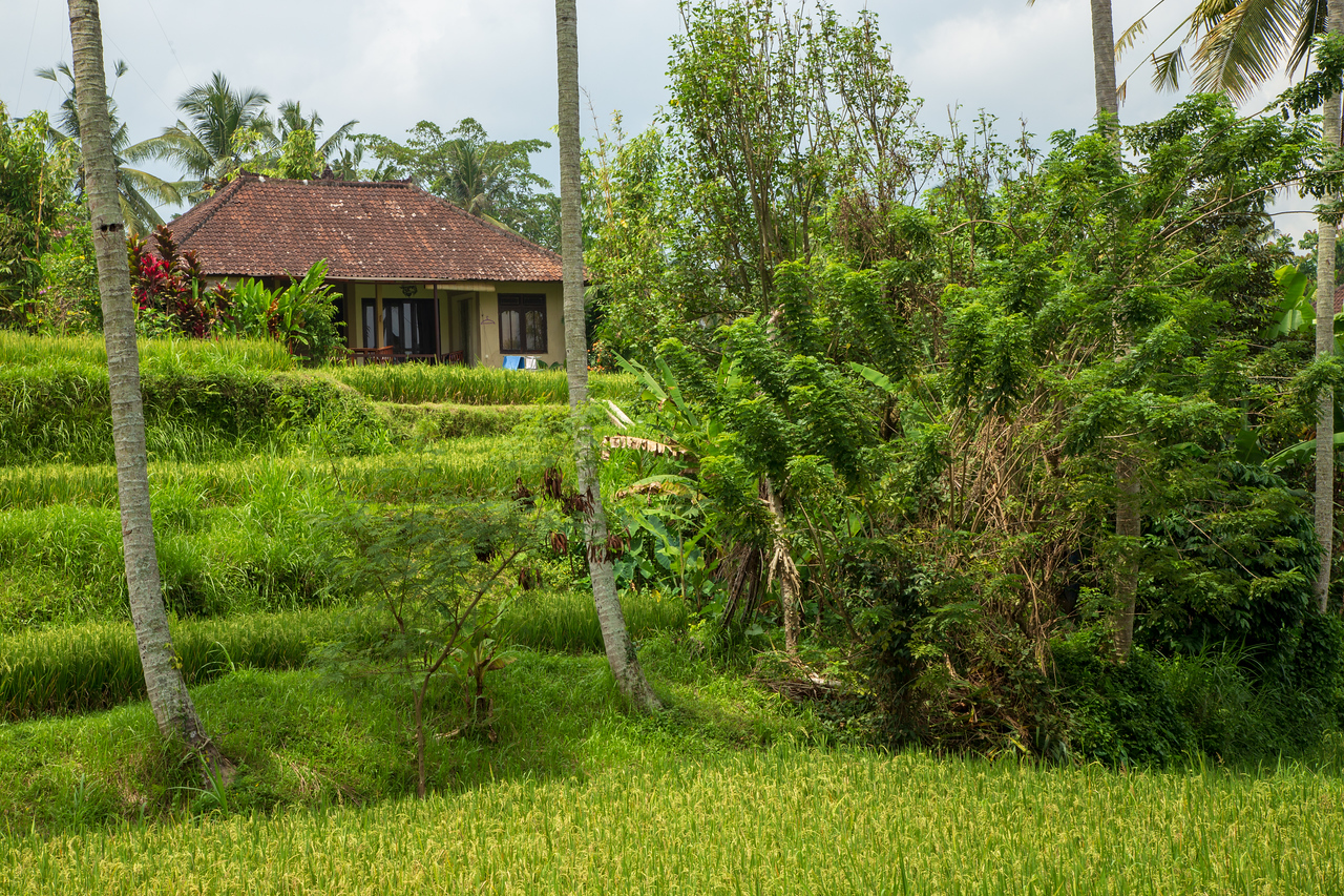 What Is the Cost of Living in Bali for a Month?