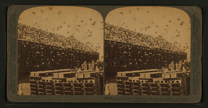 Sixteen_Thousand_Pigeons_and_their_model_apartment_houses,_on_a_great_pigeon_farm,_Los_Angeles_Cal,_from_Robert_N._Dennis_collection_of_stereoscopic_views.png