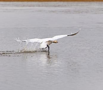 Petaluma Birds