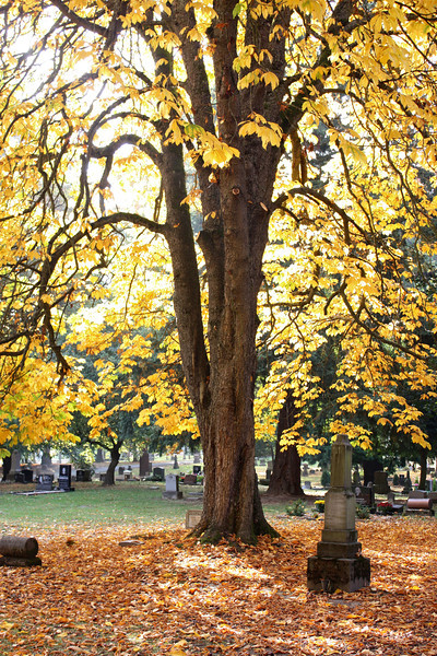 Trees of Lone Fir Cemetery