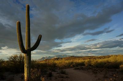Tucson Summer 2013