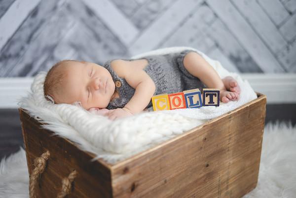 Newborn Colt