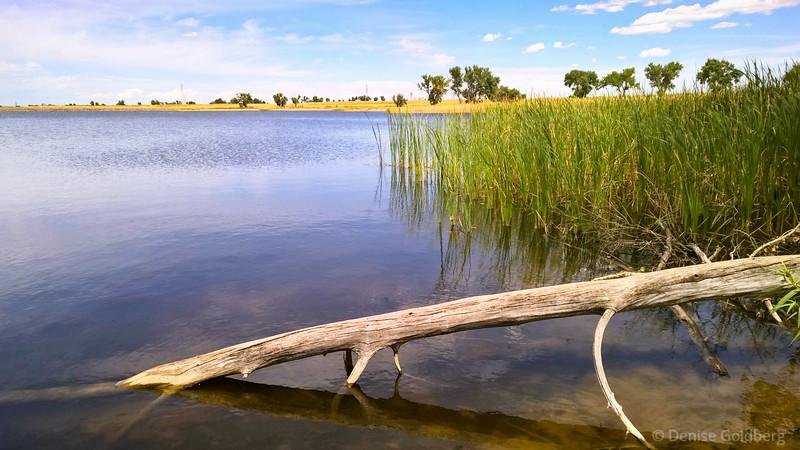 Ladora Lake, in Rocky Mountain Arsenal National Wildlife Refuge