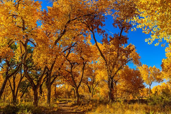 Fall Colors in the Bosque - Nov 2013