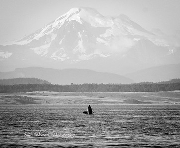 Day 1 Orcas 160720
