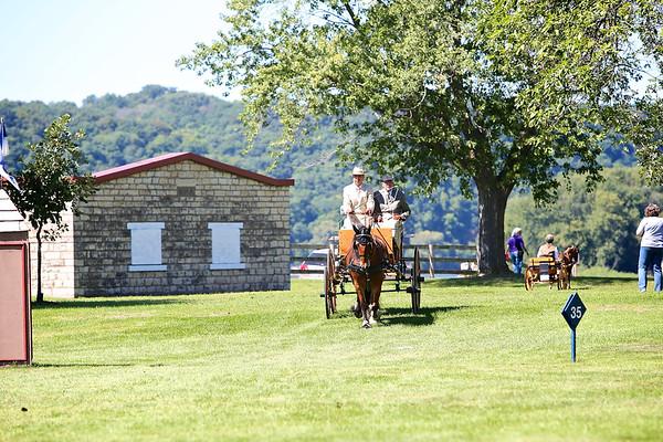2014 VILLA LOUIS-HORSE-NOVICE DRIVER