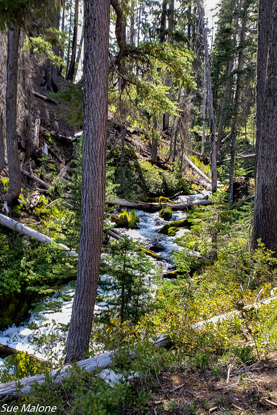 08-18-2020 Boundary Springs Hike-7.jpg