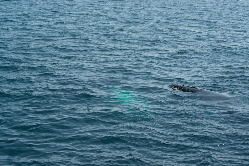 humpbacks-4199.jpg