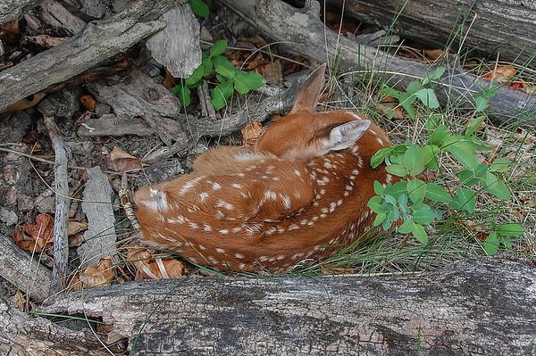 5 2013 May 30 Bambi