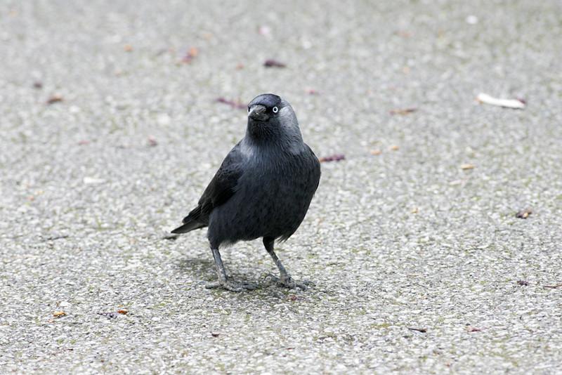 Newquay Zoo 008.jpg