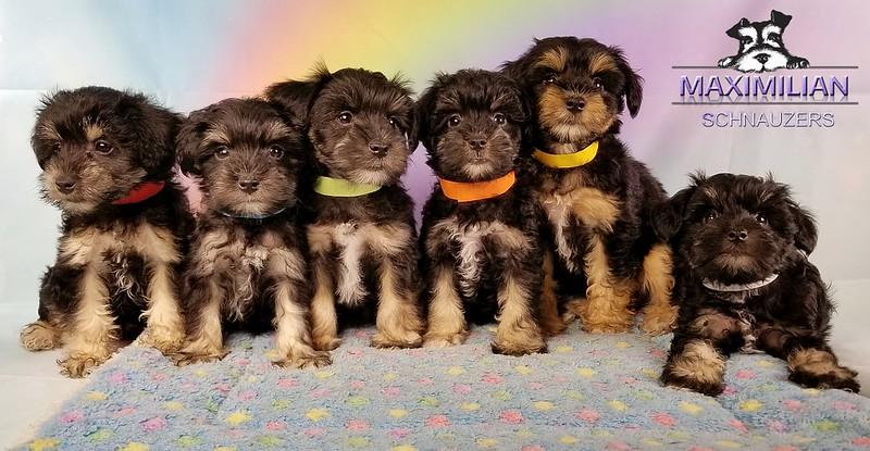 Yanabell Pups 014.jpg