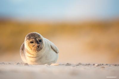 Seals (Tuleni)