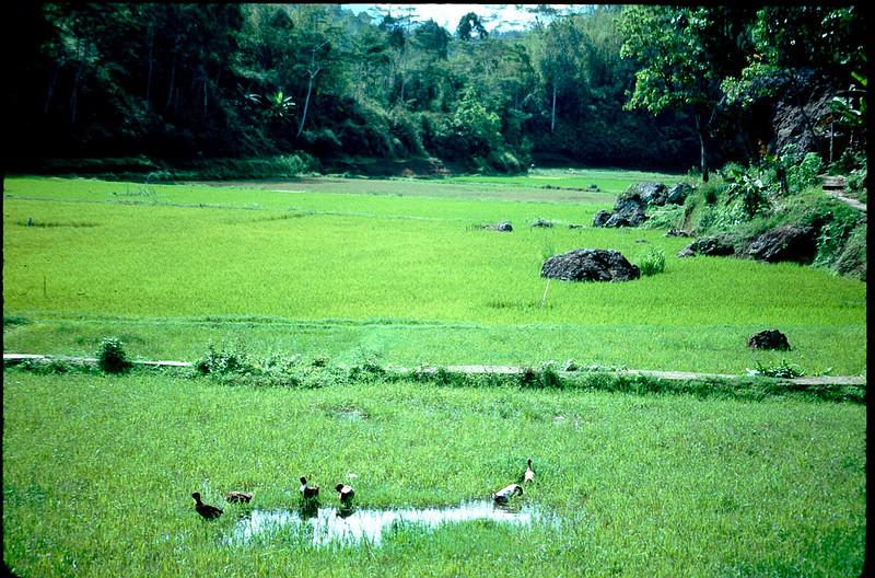 Indonesia1_093.jpg
