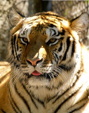 Animals-Wildlife