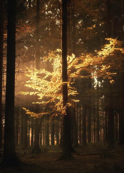 Treelight I.jpg