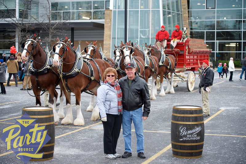 Clydesdale Portraits 66.jpg
