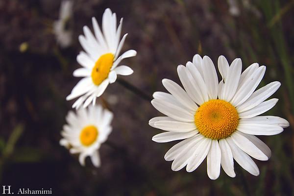 أزهار ونباتات - Flowers & Plants