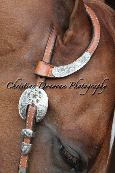 Horsemanship All Classes