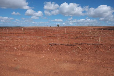 Preparing for crop planting : Highway N18 near Beja : W37.984193° : W7.933253°