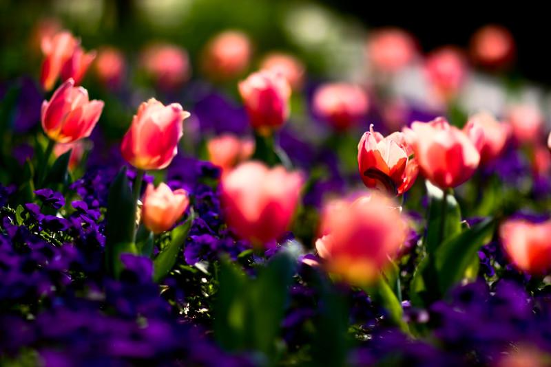 Duke_Gardens.jpg