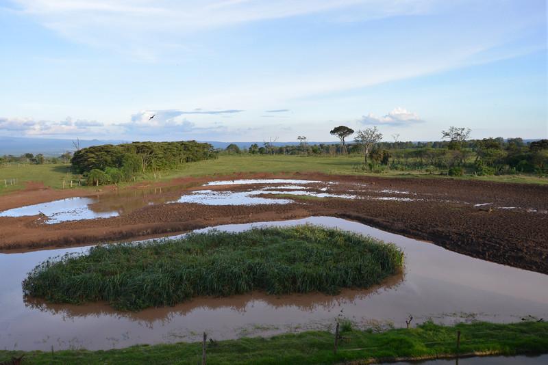 East Africa Safari 76.jpg