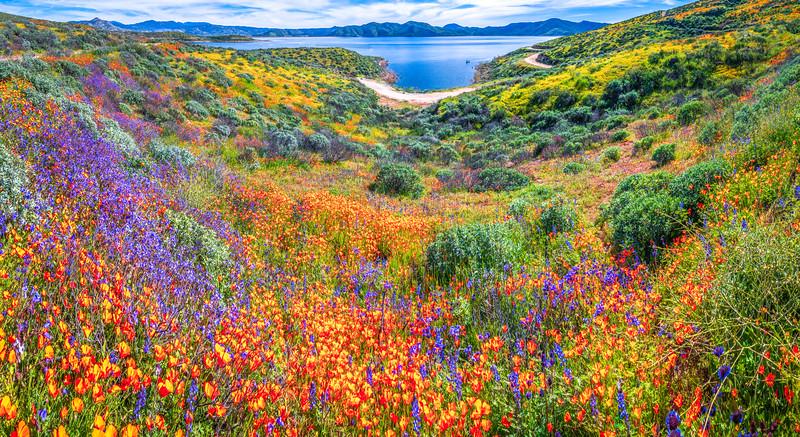 California Spring Wildflower Superbloom Symphony #9: Diamond Valley Lake Wildflower Trail Superbloom!   California Poppy Wild Flower Super Bloom Fine Art Landscape Nature Photography!  Elliot McGucken Fine Art Prints & Luxury Wall Art
