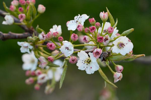 Spaldwick in Spring (Spring 2019)