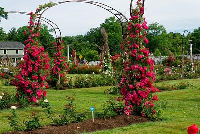 Rose Garden_June 23, 2016