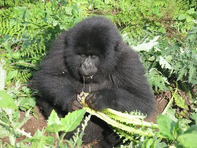 July 2010 Uganda Rwanda