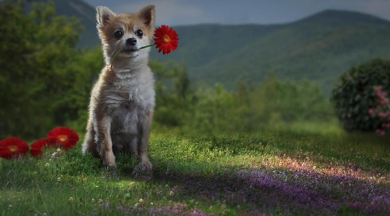 dog-rose.jpg