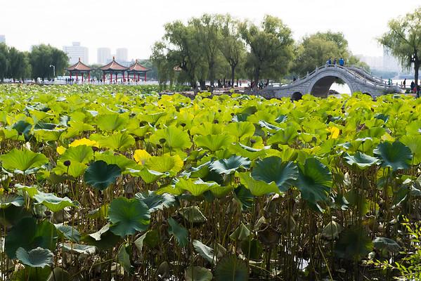 长春南湖公园