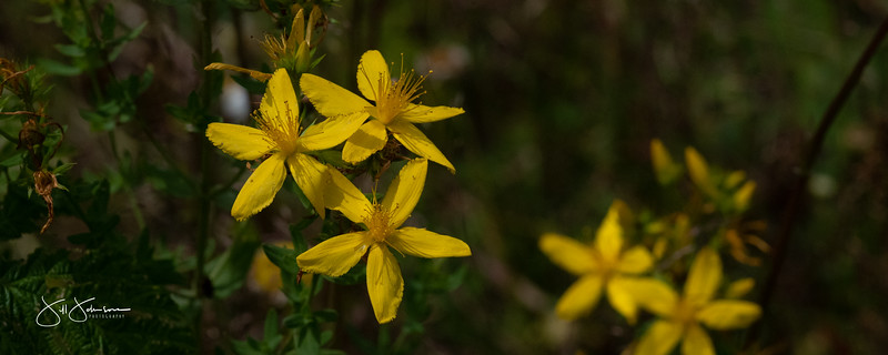 flowers-099.jpg