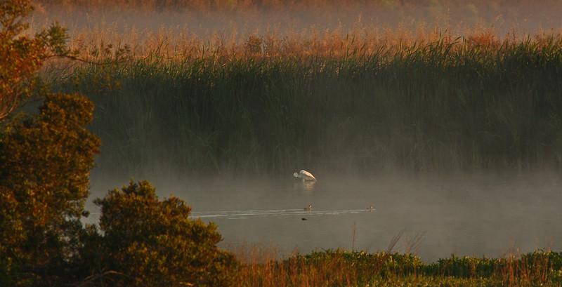 WB~Las Gallinas fog sunrise egret1280.jpg