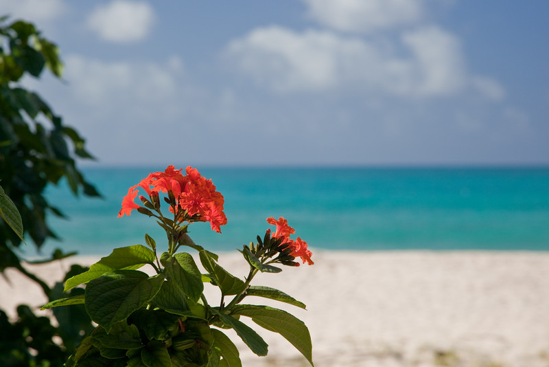 Anguilla '09