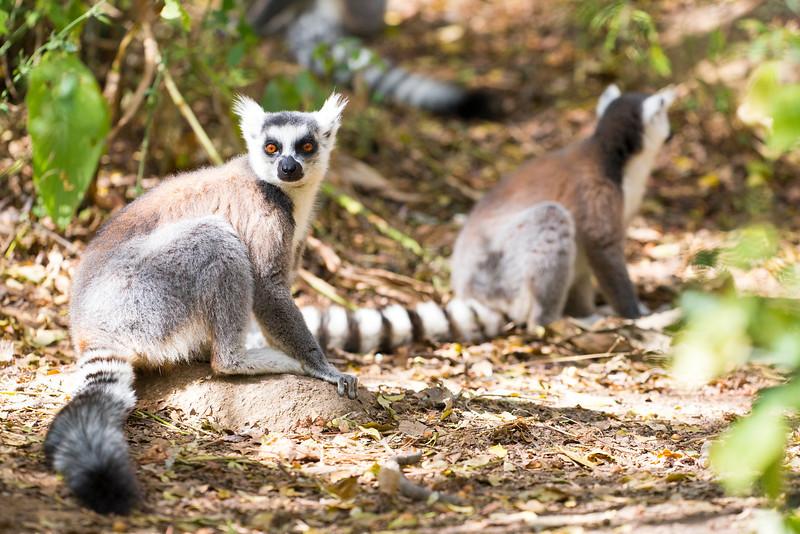 Madagascar_2013_FH0T1045.jpg