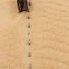 SandbridgeBeach-009