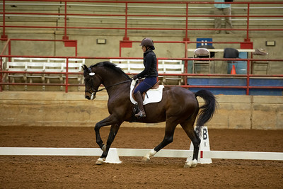 Horse 193