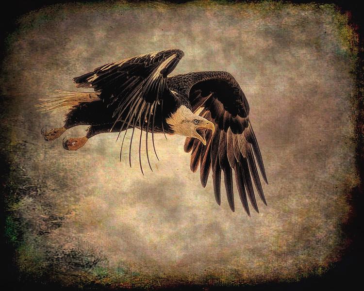 Eagle3_DSC9289-copy.jpg
