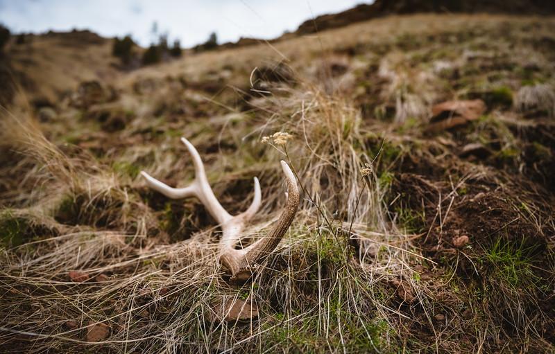 Elk shed in Oregon. April 2019