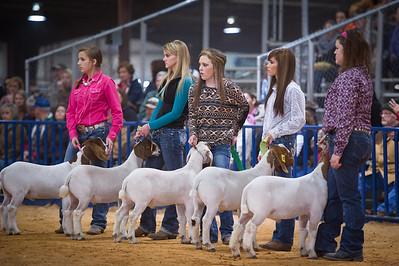 2014 Bexar County Livestock