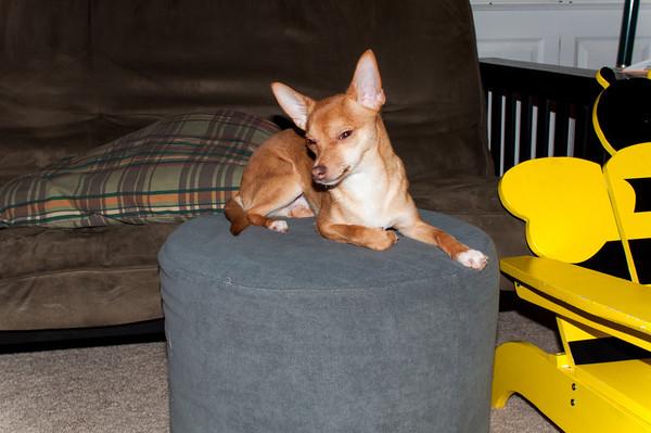 2014-01-02 Dog Sitting