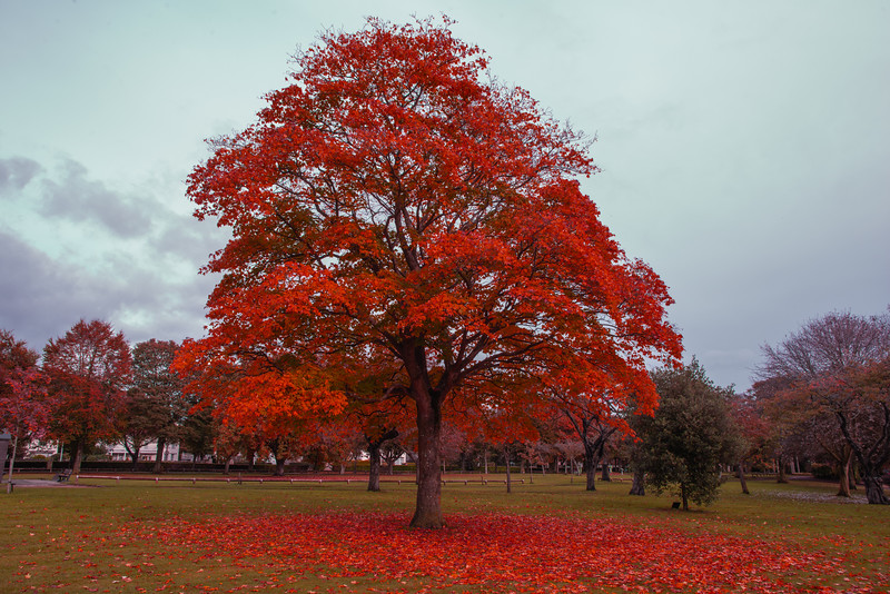 beveridge park tree.jpg