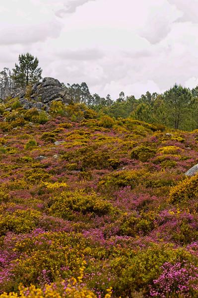 Vouzela-PR2 - Um Olhar sobre o Mundo Rural - 17-05-2008 - 7462.jpg