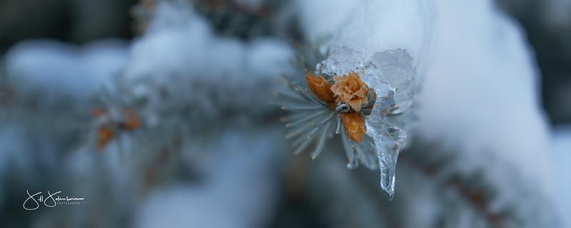 ice-01698.jpg