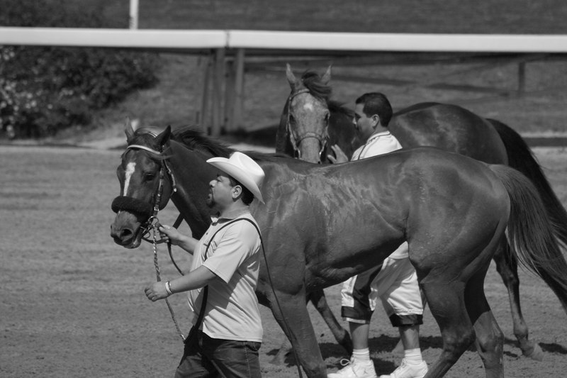 guys with horses.jpg
